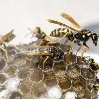 get rid of flying insects